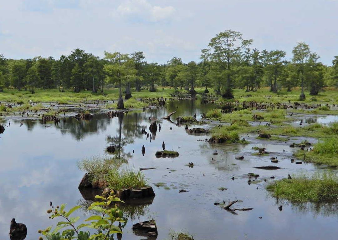 constructed wetlands urban